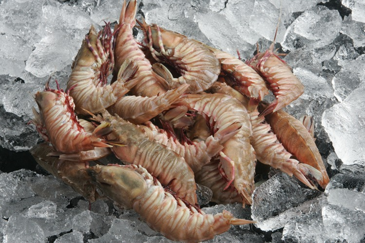 delicious rock shrimp on ice